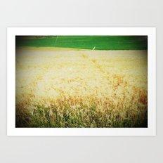Fields 2 Art Print