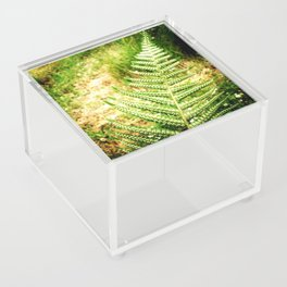Green Fern Acrylic Box