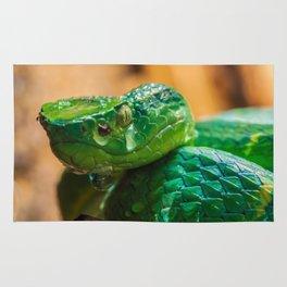 green Palm pit viper Rug