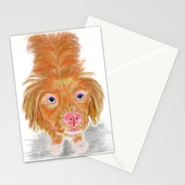 Jackson The Nova Scotia Duck Tolling Retriever Stationery Cards