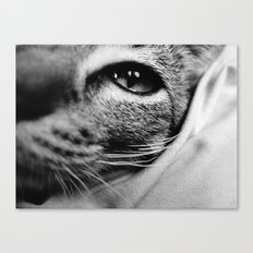 uschi the cat Canvas Print