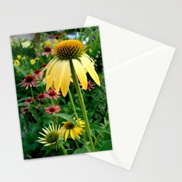 Coneflower Garden Stationery Cards