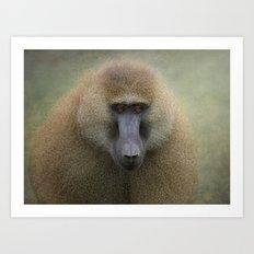 Guinea Baboon Art Print