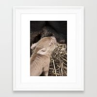 piglet Framed Art Prints featuring Piglet by Rachel's Pet Portraits