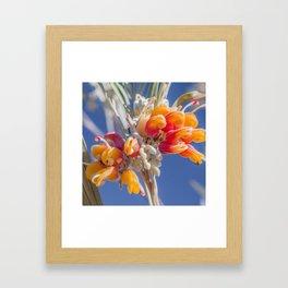 Mornington Grevillea Framed Art Print