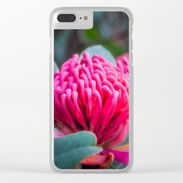Gorgeous Waratah -Floral emblem of New South Wales Clear iPhone Case