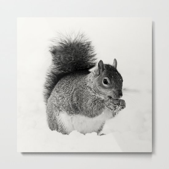 Squirrel Animal Photography Metal Print