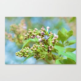 Lilac Flower - Primus Inter Pares Canvas Print