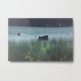 Cow In The Field II  Metal Print