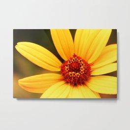 Flower Macro 2 Metal Print