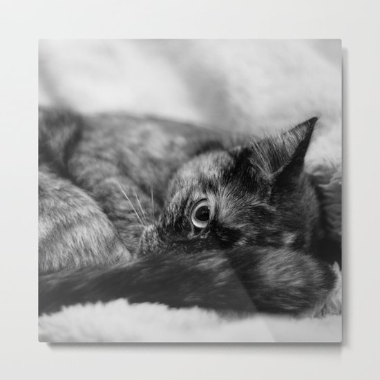 Cat I Metal Print