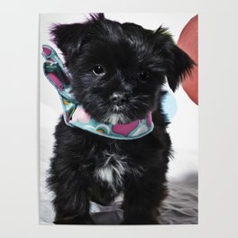 Black and White Mixed Breed Puppy Wearing a Valentine's Day Hearts Scarf Poster