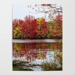 Fall Contemplation Poster