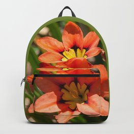 Beautiful Sparaxis Backpack
