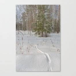 Fox tracks in snowy forest Canvas Print
