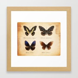 Butterflies Framed Art Print