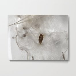 Milkweed seed and silk from the garden (vertical) Metal Print