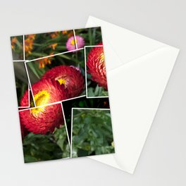 Helicrysum flower Stationery Cards