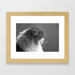 Whiskers Framed Art Print