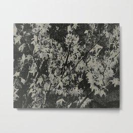 Forsythia Subdued Metal Print