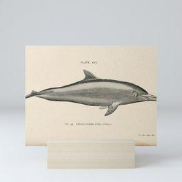 W Sidney Berridge - A Book of Whales (1900) - Figure 34: Elliott's Dolphin Mini Art Print