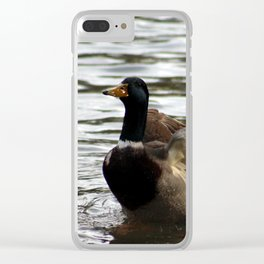 Mallard Duck flapping wings Clear iPhone Case