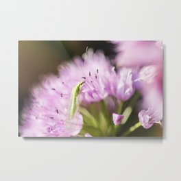 Green Lacewing on Allium - Onion Flower 2 Metal Print