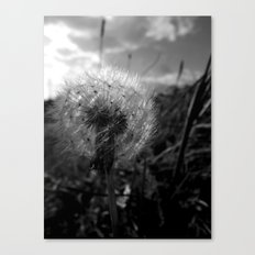 Soft Dandy Canvas Print