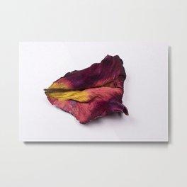Dried Rose Petal Metal Print