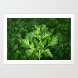 Close picture of parsley Art Print