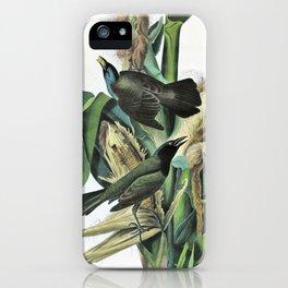 Purple Grackle Or Common Crow Blackbird - John James Audubon iPhone Case