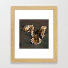 Real owl Framed Art Print
