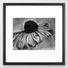 Blackeyed Susan Framed Art Print