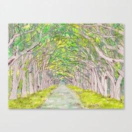 Wormsloe, Live Oaks Avenue (Savannah, GA) Canvas Print