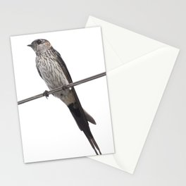 Red-Rumped Swallow Vector Background Removed Stationery Cards