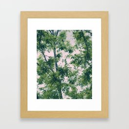 Spring Tree Branches Framed Art Print
