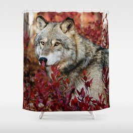 Wolf in red foliage Shower Curtain
