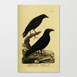 Crow And Raven Canvas Print