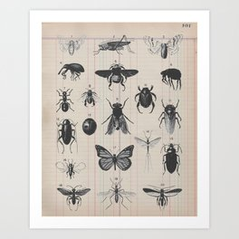 Vintage Insect Study on antique 1800's Ledger paper print Art Print