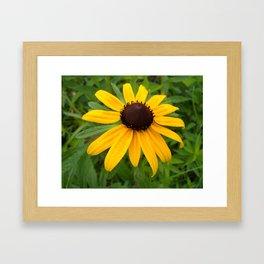 Soaked with Sunshine Framed Art Print
