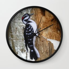 Hairy Woodpecker in the Maine Woods Wall Clock