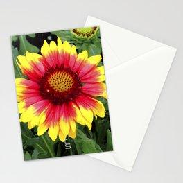 Sunset Blossom Stationery Cards