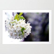 flower x. Art Print