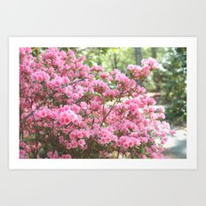 Spring Pink Blossoms Trees Nature Print - Pink Spring Trees Blossoms Art Print