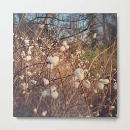 Snowberries in Winter Metal Print
