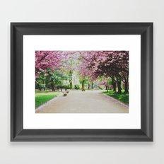 french cherry blossom Framed Art Print