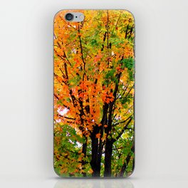 Leaves Changing Colors iPhone Skin