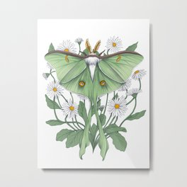 Metamorphosis - Luna Moth Metal Print