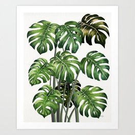 Tropical Monstera  Art Print