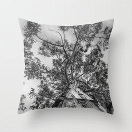 The old eucalyptus tree Throw Pillow
